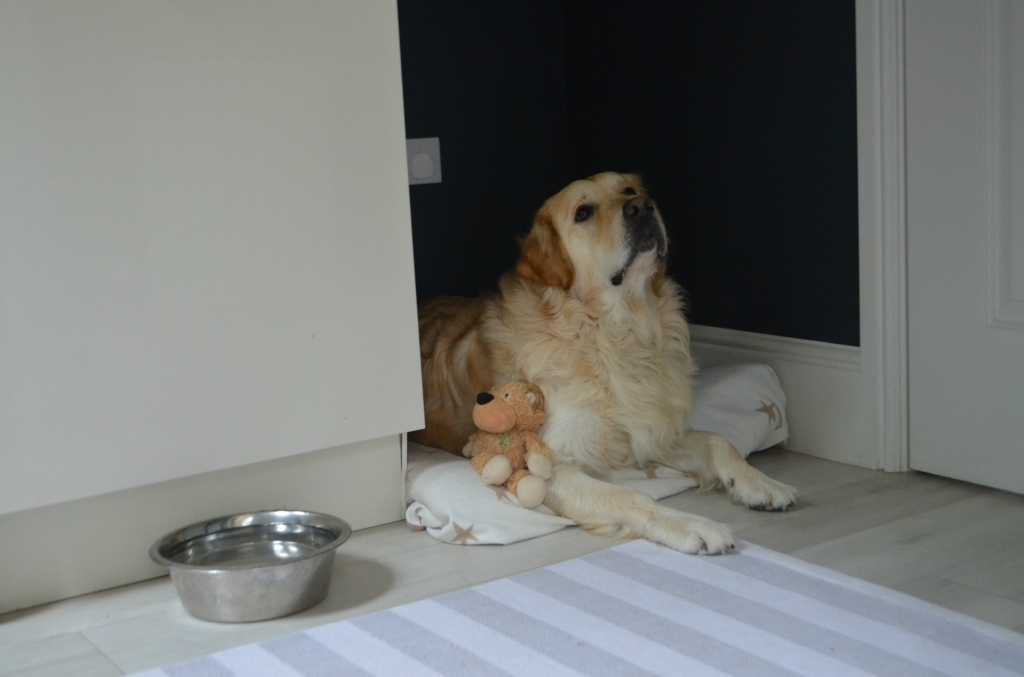Utility Room Dog Bed - The Cardiff Cwtch