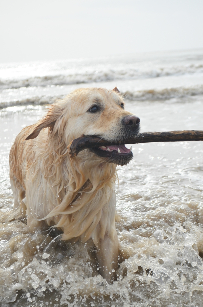 5 Things I've Been Loving Lately - The Cardiff Cwtch - Golden Retriever Beach